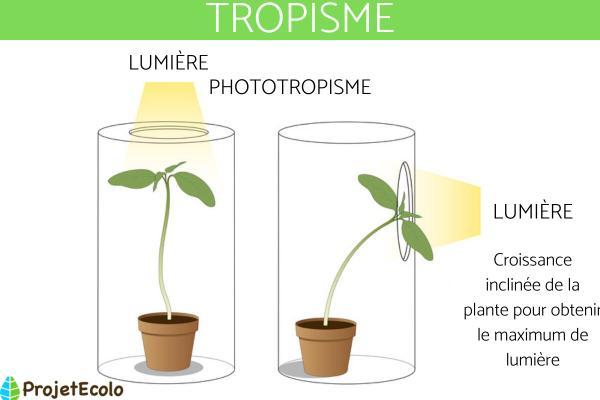 Tropisme : Définition, types et exemples