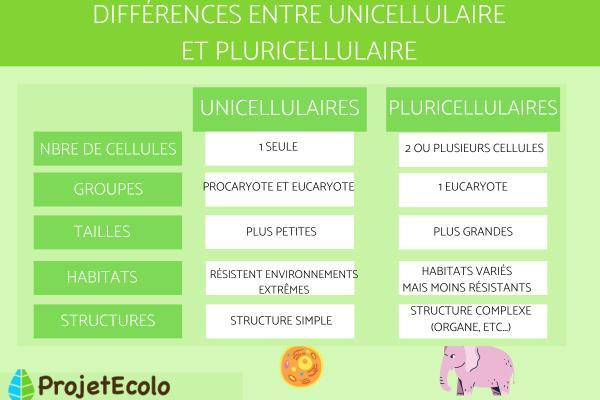 Organismes unicellulaires et pluricellulaires : exemples et différences - Différences entre unicellulaire et pluricellulaire