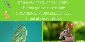 Organismes unicellulaires et pluricellulaires : exemples et différences