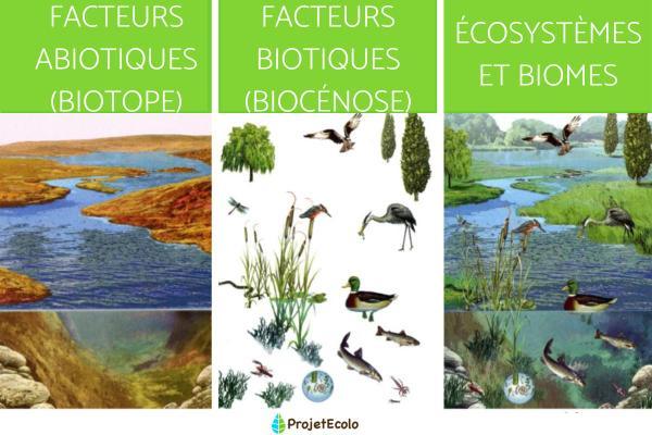 Facteurs abiotiques : Définition, caractéristiques et exemples - Que sont les facteurs abiotiques - Définition des facteurs abiotiques