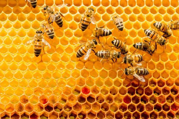 Comment les abeilles communiquent entre elles