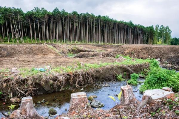 Solutions à la pollution des sols - Conséquences de la pollution du sol et de la pollution de la terre