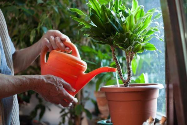 Vinaigre blanc et plantes vertes : bienfaits et utilisation - Bienfaits du vinaigre blanc au jardin