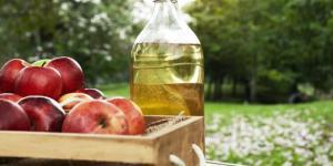 Vinaigre blanc et plantes vertes : bienfaits et utilisation