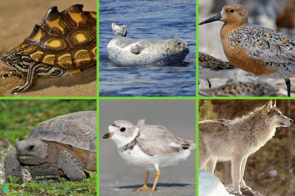 Animaux en voie de disparition aux Etats-Unis - Autres animaux menacés d'extinction aux États-Unis