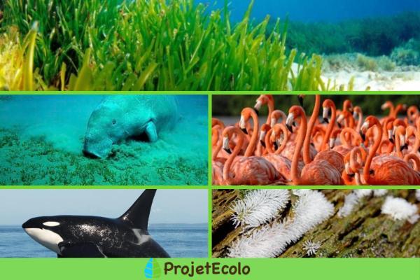 Facteur biotique : Définition, caractéristiques, interaction et exemples - Exemples de facteurs biotiques aquatiques