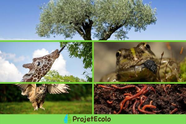 Facteur biotique : Définition, caractéristiques, interaction et exemples - Exemples de facteurs biotiques terrestres
