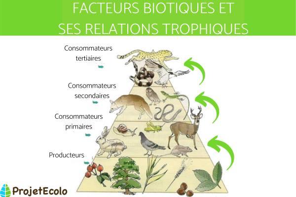Facteur biotique : Définition, caractéristiques, interaction et exemples - Interaction des facteurs biotiques
