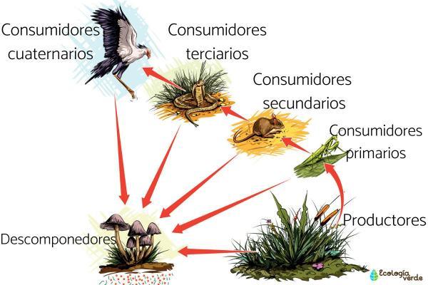 Chaîne trophique - Définition et exemple - Types de chaînes trophiques