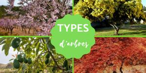 Les différents types d'arbres