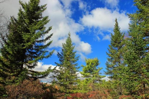 Les différents types d'arbres - Types d'arbres aux feuilles persistantes