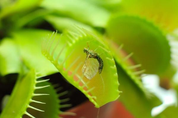 Animaux insectivores - Définition, caractéristiques et liste - Plantes insectivores