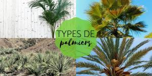 Types de palmiers - Liste et caractéristiques avec photos