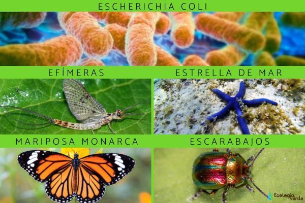 Espèces indicatrices : Définition et exemples - Exemples d'espèces animales bioindicatrices