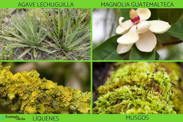 Espèces indicatrices : Définition et exemples - Exemples d'espèces indicatrices de la flore