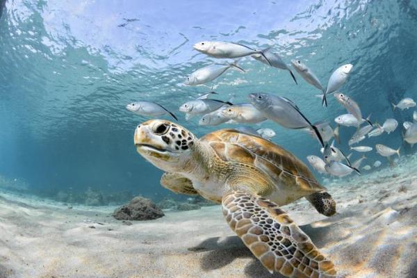 Animaux marins : caractéristiques, types et liste