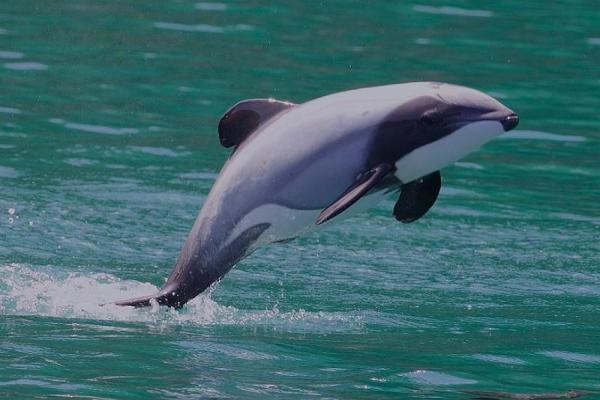 Animaux marins : caractéristiques, types et liste - Animaux marins en danger d'extinction