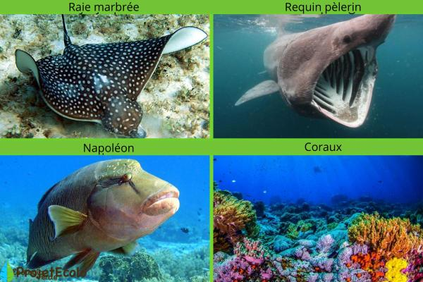 Animaux marins : caractéristiques, types et liste - Autres noms d'animaux marins