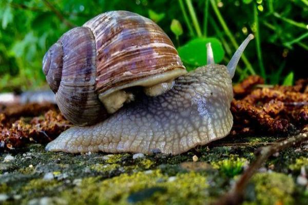 Comment se débarrasser des limaces et escargots dans le jardin -  Comment prévenir les limaces et les escargots dans notre jardin ?