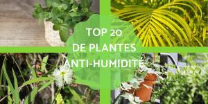 Plantes qui absorbent l'humidité - 20 plantes anti-humidité