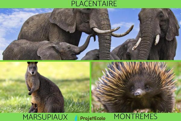 Qu'est-ce qu'un mammifère - Liste et caractéristiques - Types de mammifères