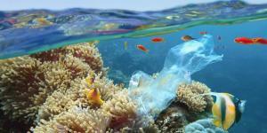 Plastique dans la mer : causes, conséquences et solutions