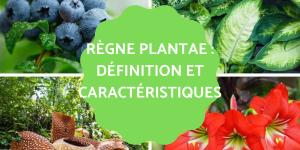 Règne Plantae : Définition, caractéristiques, classification et exemples