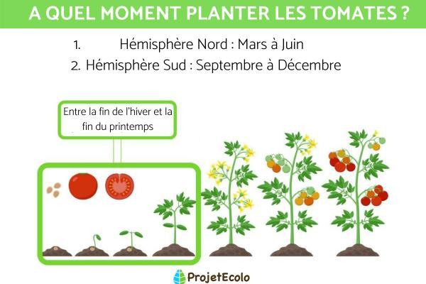 A quel moment planter les tomates