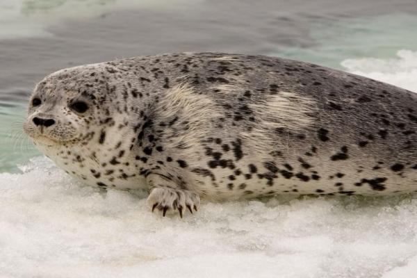 Animaux de l'Antarctique - Noms, caractéristiques et photos