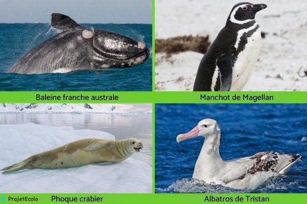 Animaux de l'Antarctique - Noms, caractéristiques et photos - Animaux en danger d'extinction en Antarctique