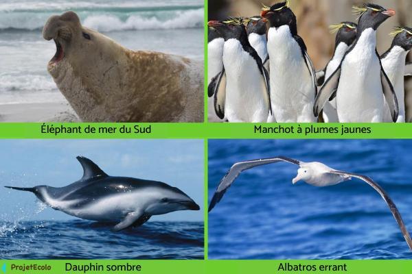 Animaux de l'Antarctique - Noms, caractéristiques et photos - Autres animaux de l'Antarctique