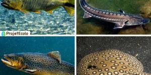 Les poissons d'eau douce : espèces, liste et images
