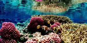 Écosystème marin : définition, caractéristiques, flore et faune