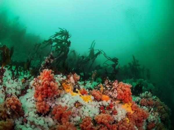 Écosystème marin : définition, caractéristiques, flore et faune - Flore des écosystèmes marins