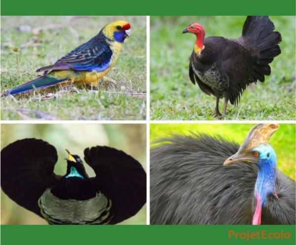 +20 oiseaux d'Australie - Noms et photos