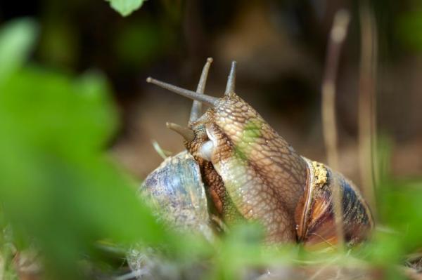 Animaux invertébrés : Caractéristiques et exemples - Animaux vertébrés : les mollusques