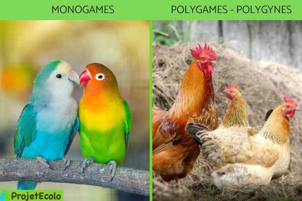 Classification des oiseaux - Définition et photos - Classification des oiseaux en fonction de leur relation avec d'autres oiseaux