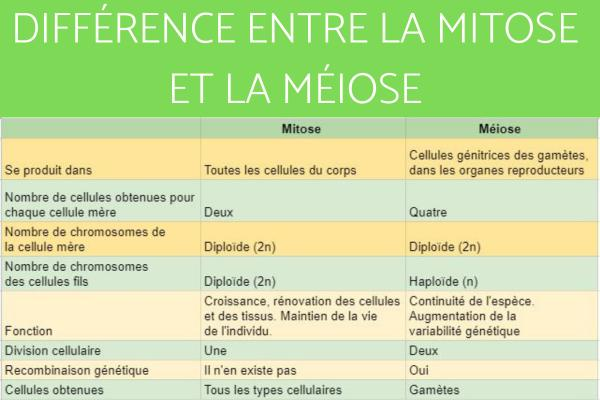 Différence entre méiose et mitose - Différence entre méiose et mitose - Tableau comparatif entre mitose et méiose