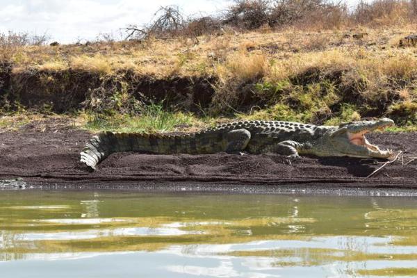 Animaux à sang froid - Liste avec photos - Crocodiles, grands animaux à sang froid