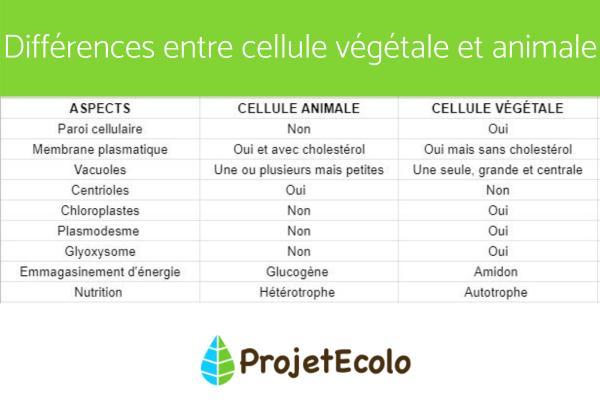 Différence entre cellule animale et végétale - Différences entre cellule animale et végétale