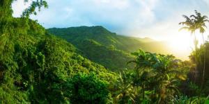 Forêt tropicale - Caractéristiques, flore et faune