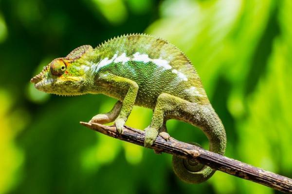 Animaux vertébrés : classification, caractéristiques et exemples - Reptiles