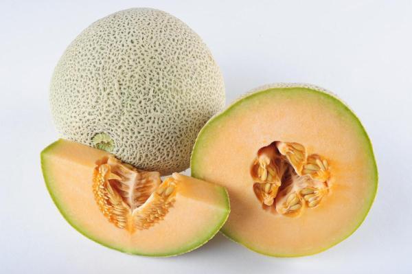 8 types de melons - Cantaloup ou melon brodé