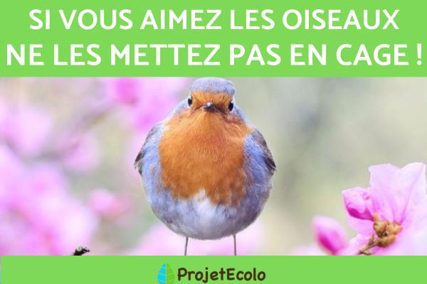 13 oiseaux chanteurs - Ne mettez pas les oiseaux en cage