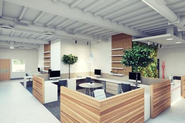 Comment protéger l'environnement en entreprise - Plantes vertes pour le bureau afin de protéger l'environnement