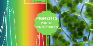 Pigments photosynthétiques : Définition, types et exemples