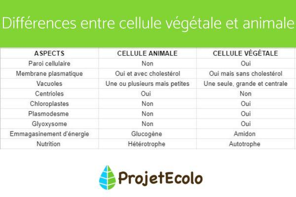 Cellule végétale - Définition, schéma et taille - Différence entre cellule végétale et animale