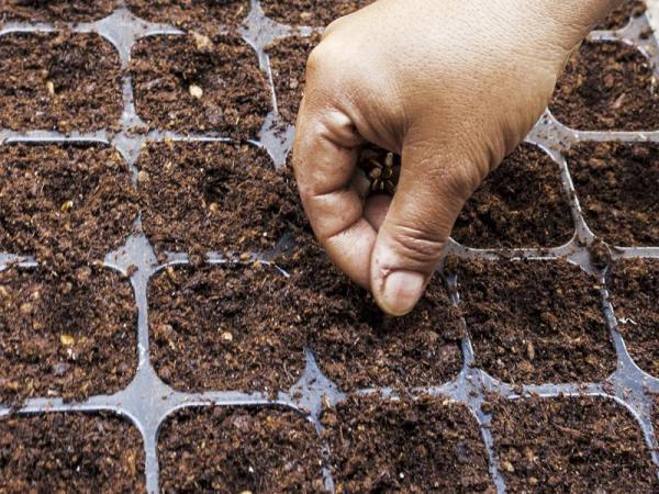Comment planter des melons - Comment semer des melons ?