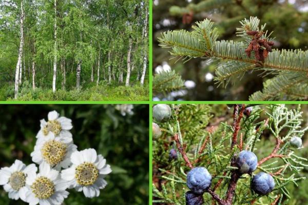 Flore et faune des Pyrénées - Flore des Pyrénées