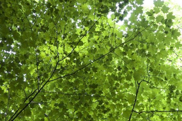 Parties d'un arbre - Schéma d'un arbre - Les feuilles de l'arbre et ses fonctions